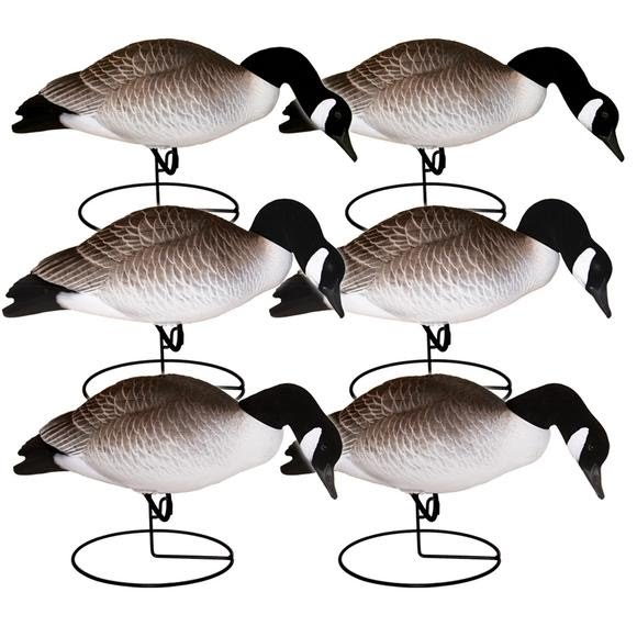 Hard Core Full Body Canada Geese: Feeder 6 Pack Image